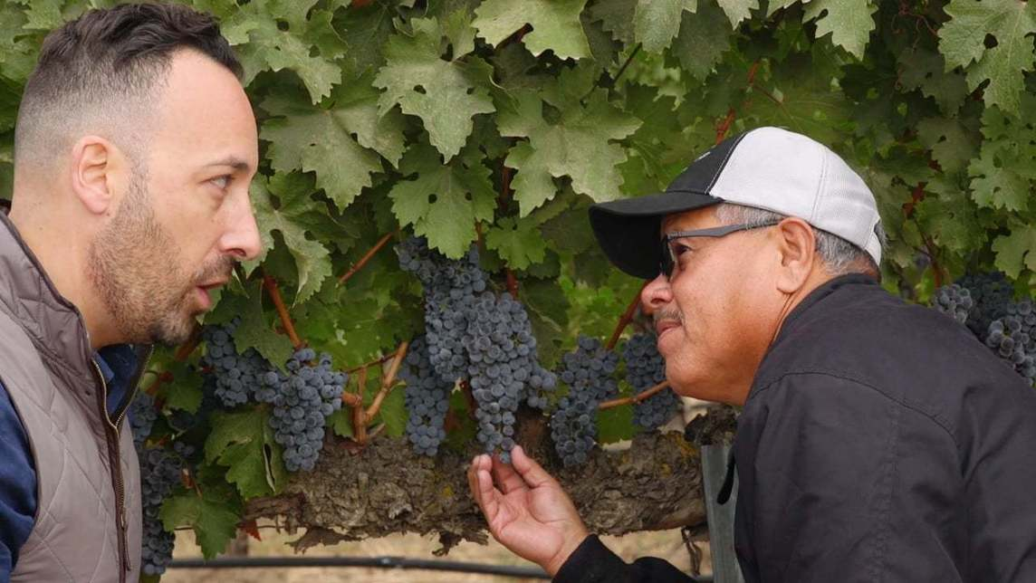 Two men examining grapes in a vineyard