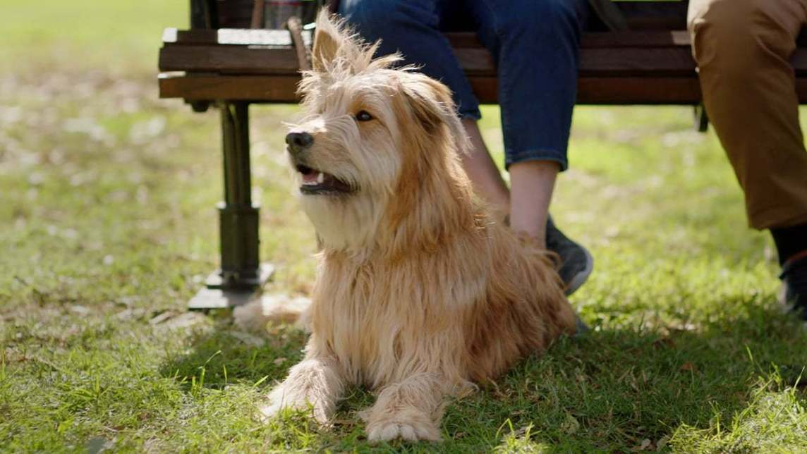 Cute shaggy dog sitting on the grass near owner's feet