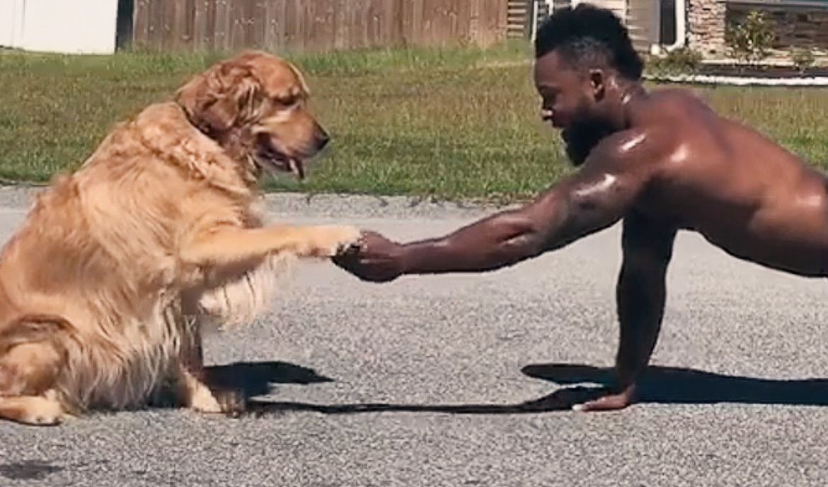 A man doing pushups shakes hands with his golden retriever