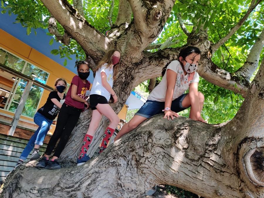 youths climbing a tree