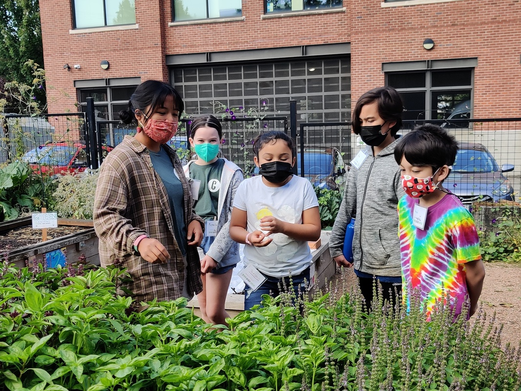 youth behind basil and lavender plants