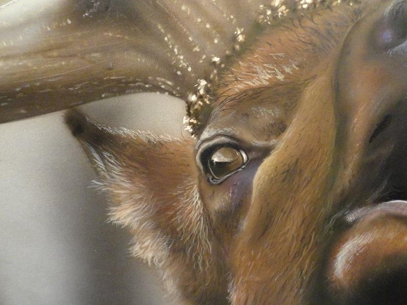 Wildlife 2017-10-16 - close-up of the elk.