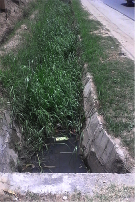 Natural vegetation in drains along New Bagamoyo Road PHOTO CREDIT: Ramani Huria