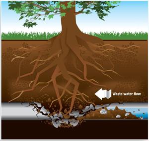 sewer-line