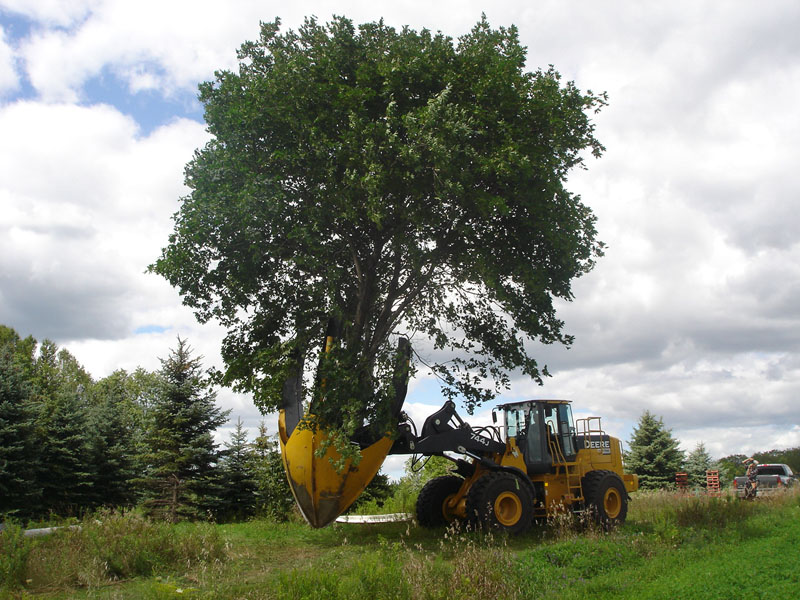 Dutchman_95_Tree_Spade_on_Loader