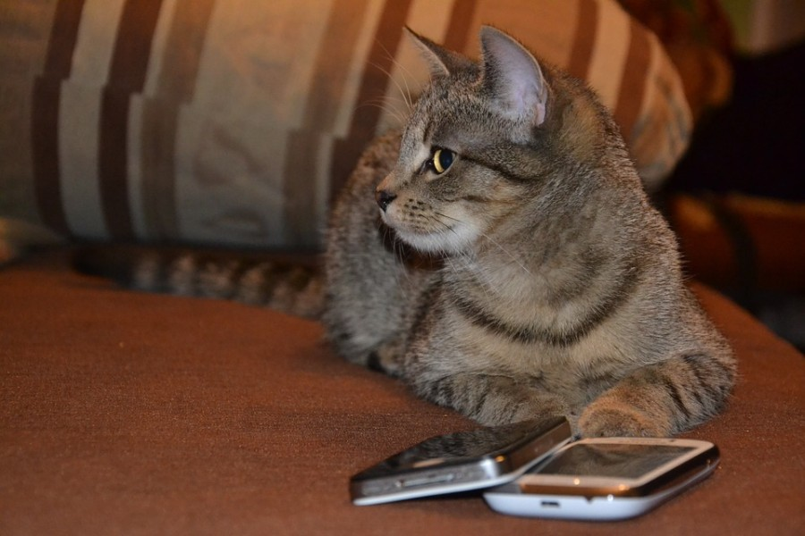 cat with phone