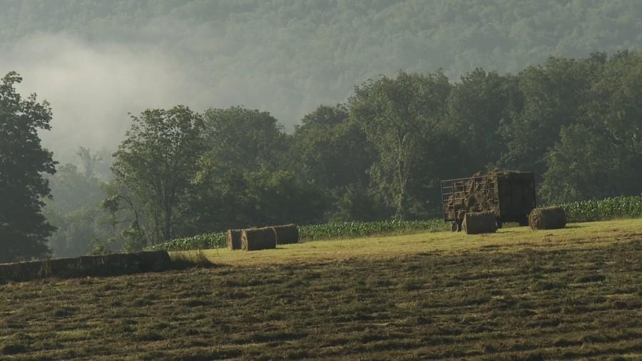 hay corn beauty