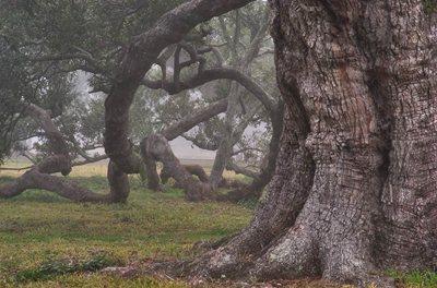 TreeExample
