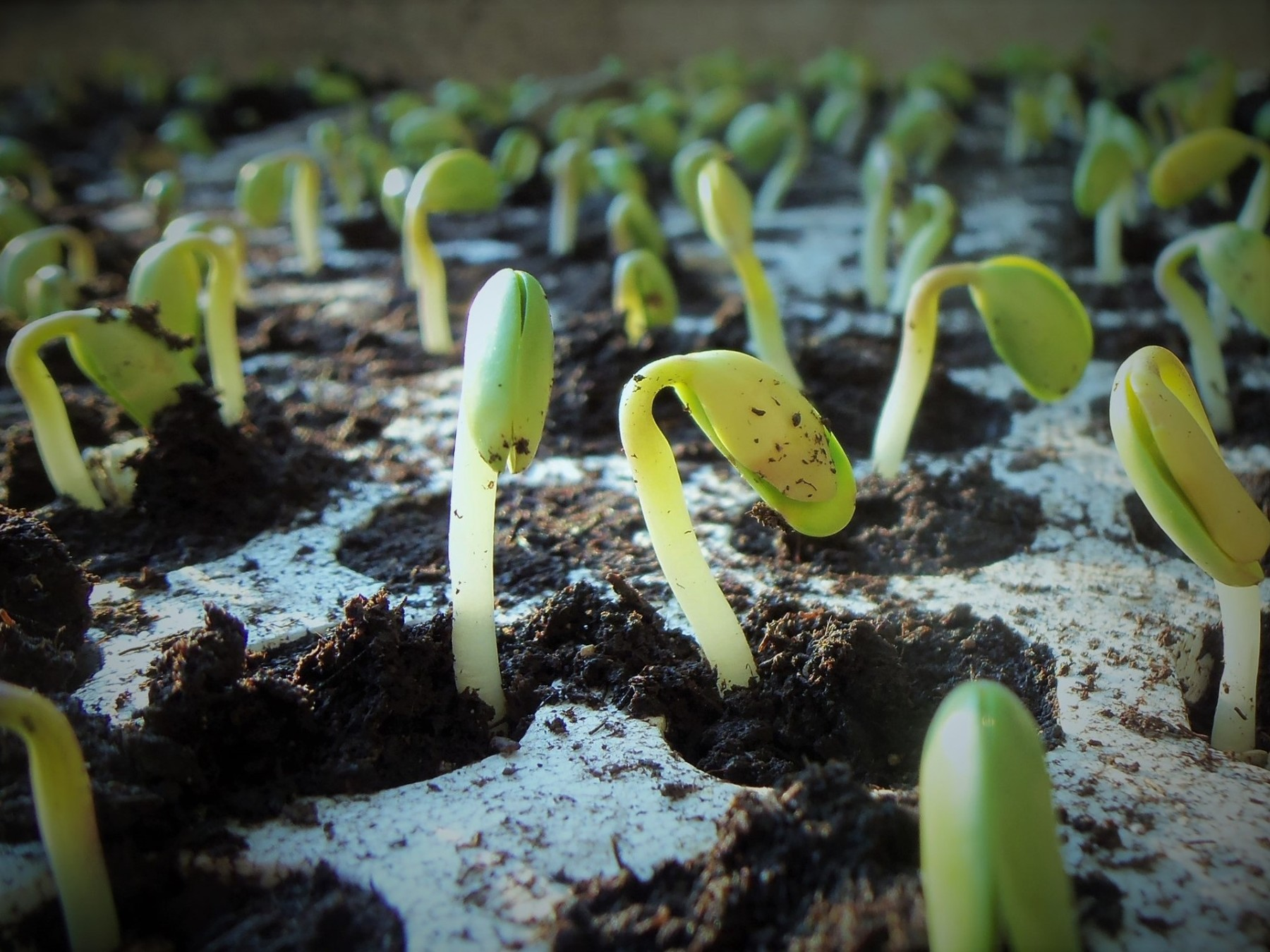 plants-1331667_1920