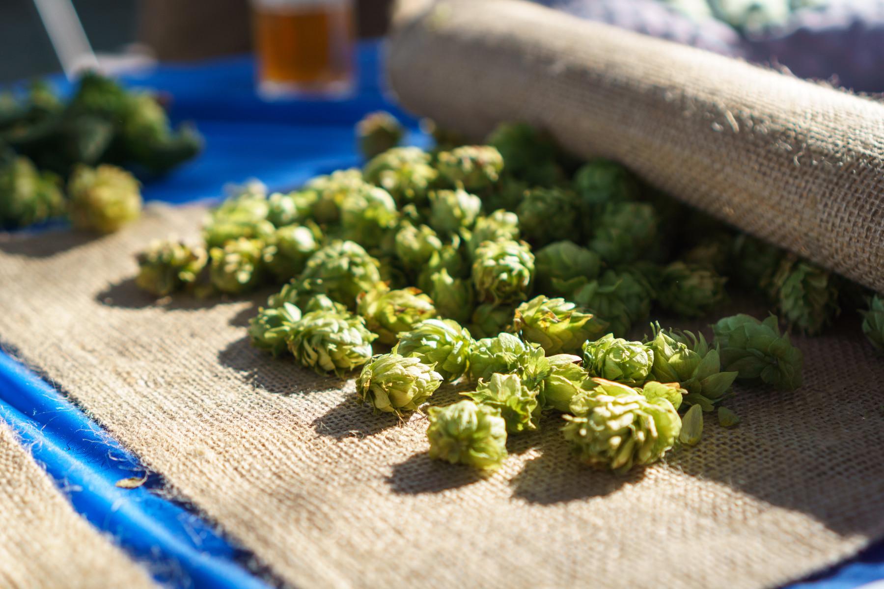 festival-beer-hops