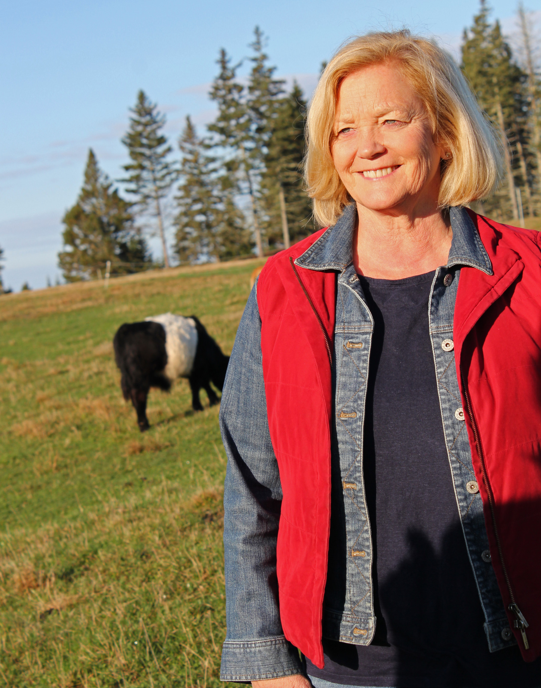 Pingree-cow-small