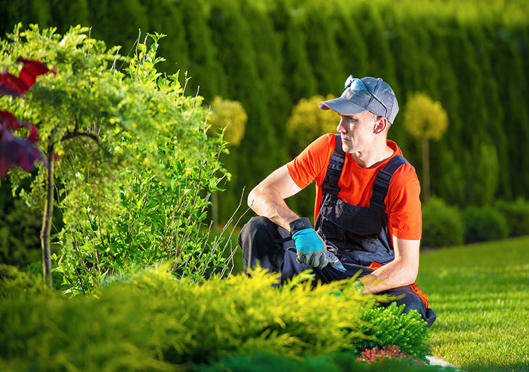3 Techniques of Experts with a Green Thumb
