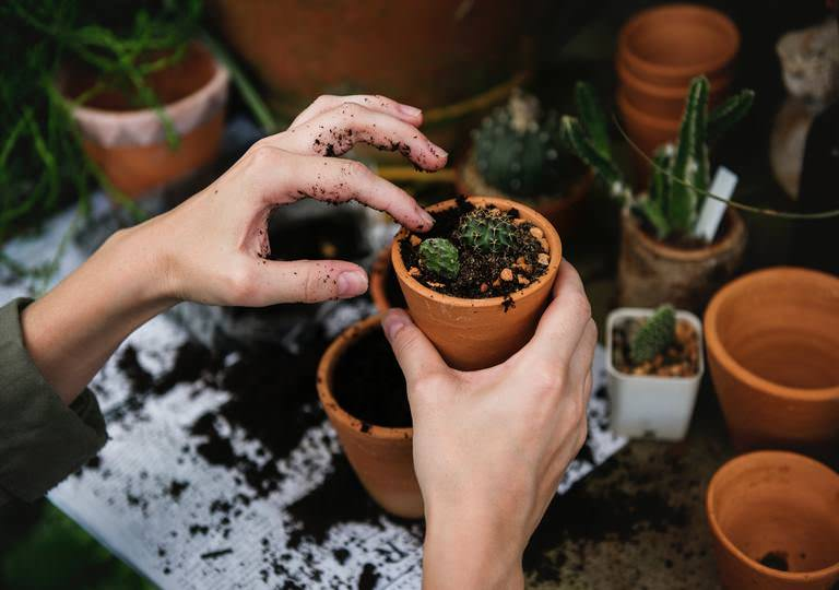4 Gardening Tips for Beginners Living in the City