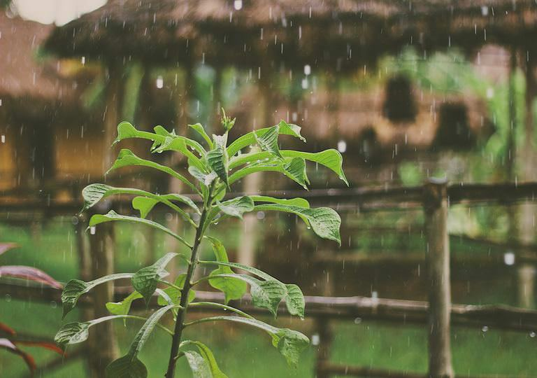 Does rain affect pest control?