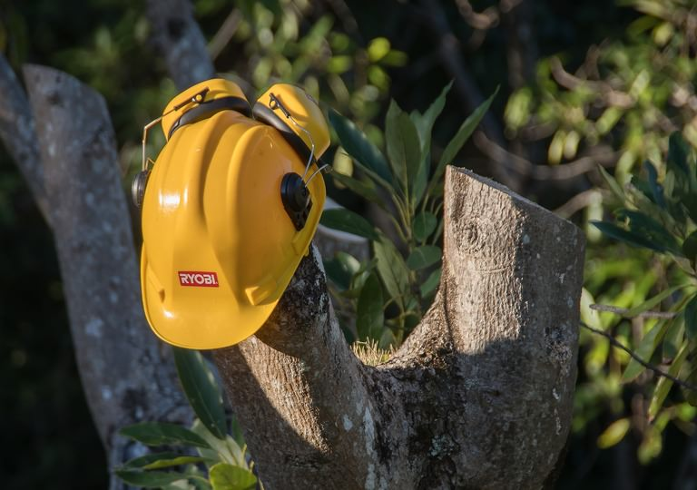Tree Surgery Costs for 2019
