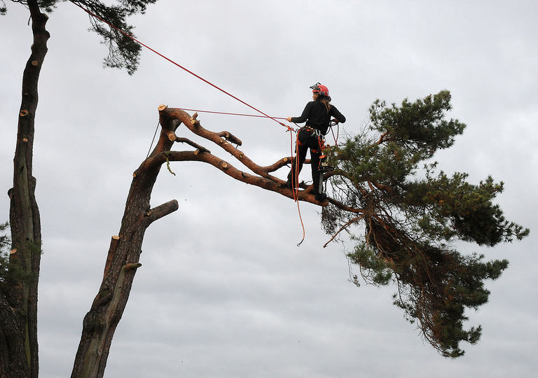How much does an arborist cost?