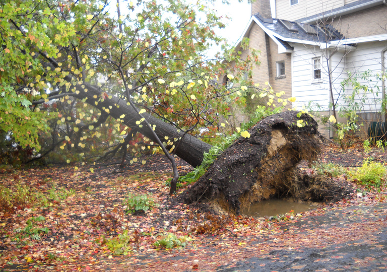 Uprooted Tree Removal 101