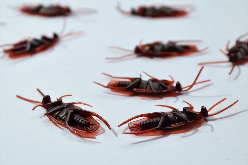 Negative Effects of Pest Infestations