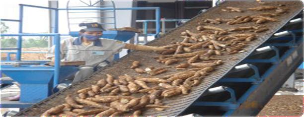 PPT – Cassava Processing Plant | Cost, Market Trends