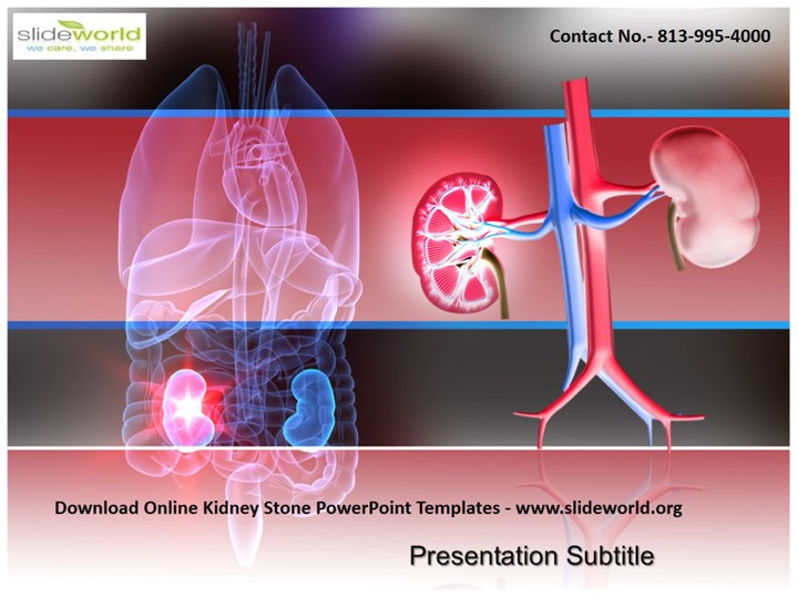 PPT – Download Kidney Stone PowerPoint Templates PowerPoint