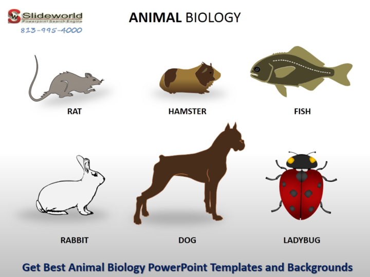 Ppt Get Best Animal Biology Powerpoint Templates And