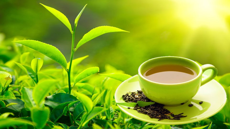 Ppt Global Green Tea Leaves Sales Market Powerpoint Presentation Free To Download Id 86f8be Ywm0o