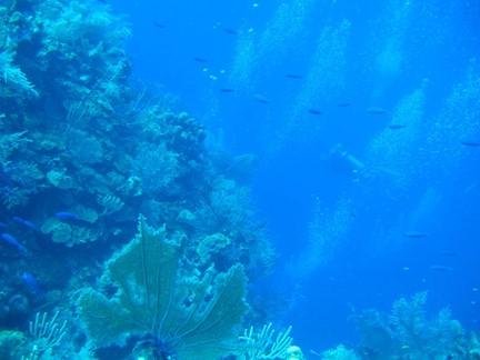 Great barrier reef presentation.