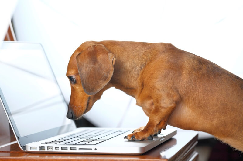 top 5 benefits of bringing your dog to work
