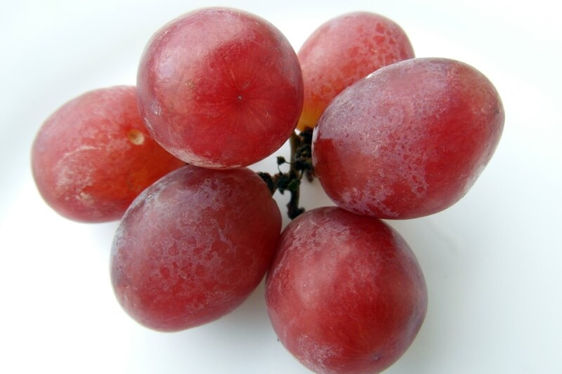 why dogs shouldn't eat grapes