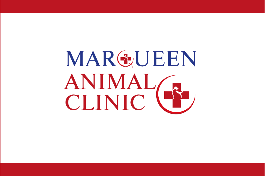 Logo Design by Private User - Entry No. 45 in the Logo Design Contest Fun Logo Design for MarQueen Animal Clinic.