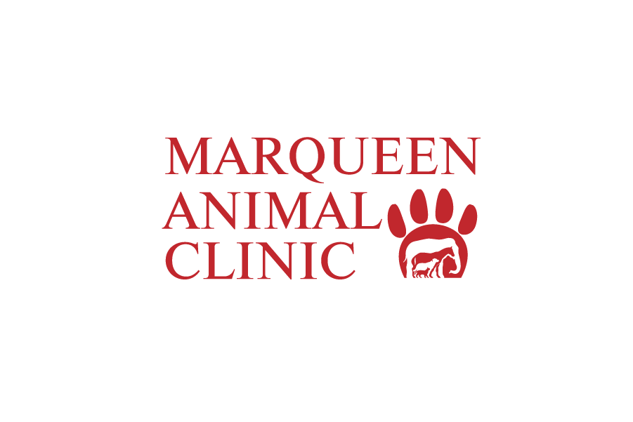 Logo Design by Private User - Entry No. 46 in the Logo Design Contest Fun Logo Design for MarQueen Animal Clinic.