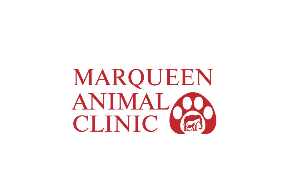 Logo Design by Private User - Entry No. 48 in the Logo Design Contest Fun Logo Design for MarQueen Animal Clinic.