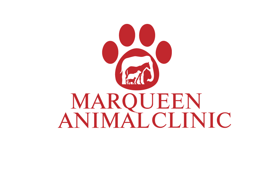 Logo Design by Private User - Entry No. 76 in the Logo Design Contest Fun Logo Design for MarQueen Animal Clinic.