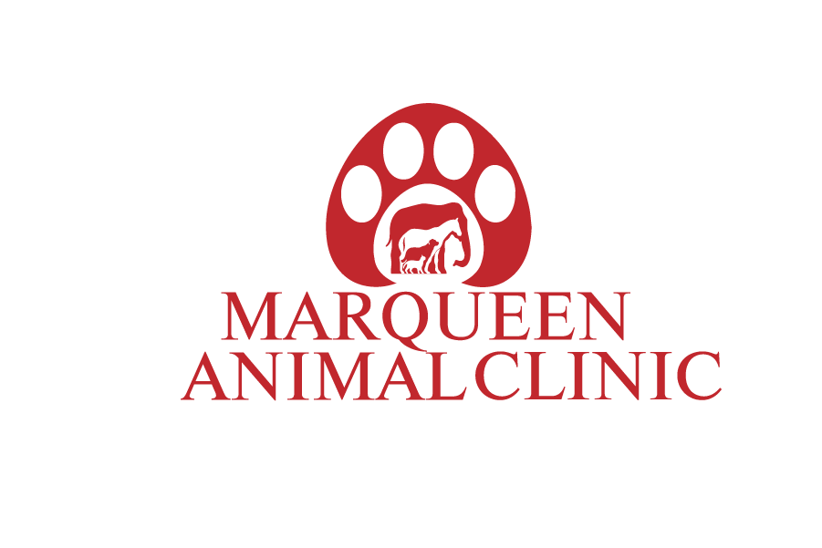 Logo Design by Private User - Entry No. 77 in the Logo Design Contest Fun Logo Design for MarQueen Animal Clinic.