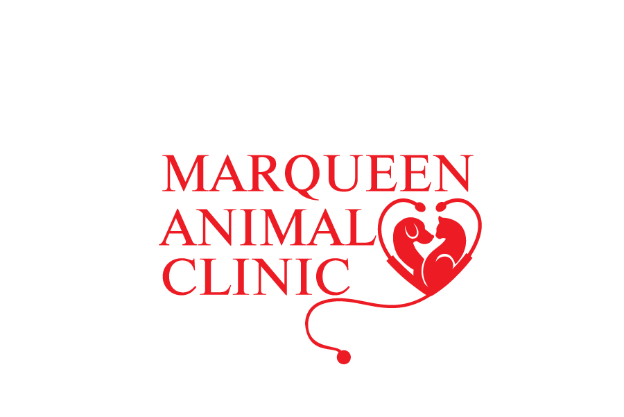 Logo Design by Private User - Entry No. 106 in the Logo Design Contest Fun Logo Design for MarQueen Animal Clinic.