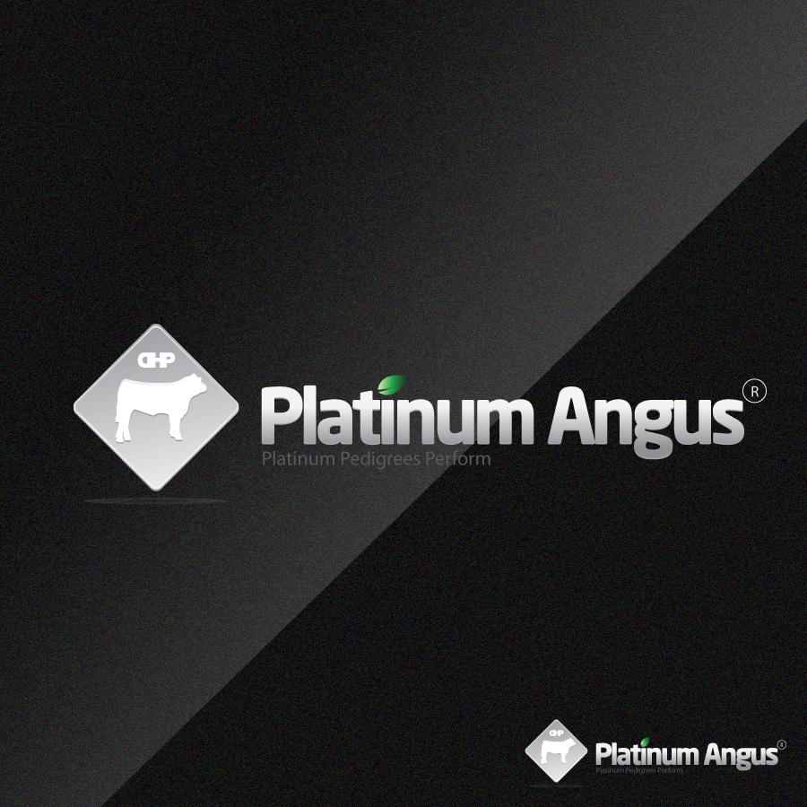 Logo Design by rockpinoy - Entry No. 48 in the Logo Design Contest Platinum Angus Cattle.