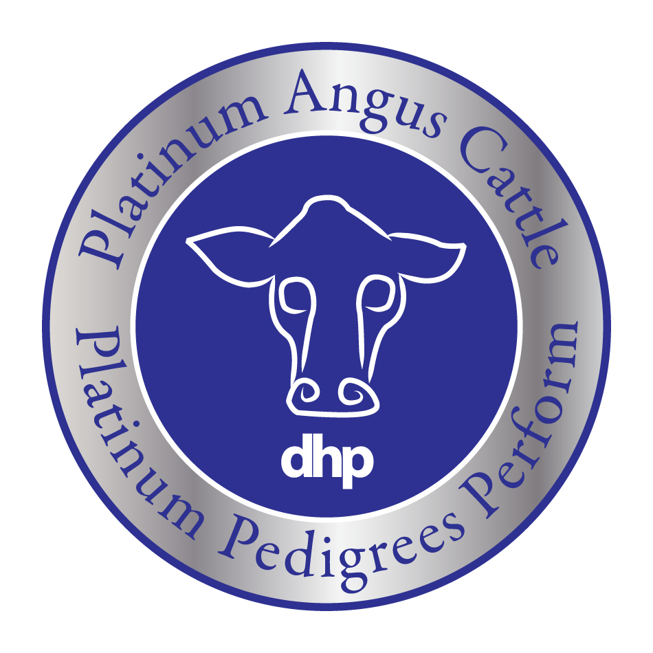 Logo Design by LaTorque - Entry No. 59 in the Logo Design Contest Platinum Angus Cattle.