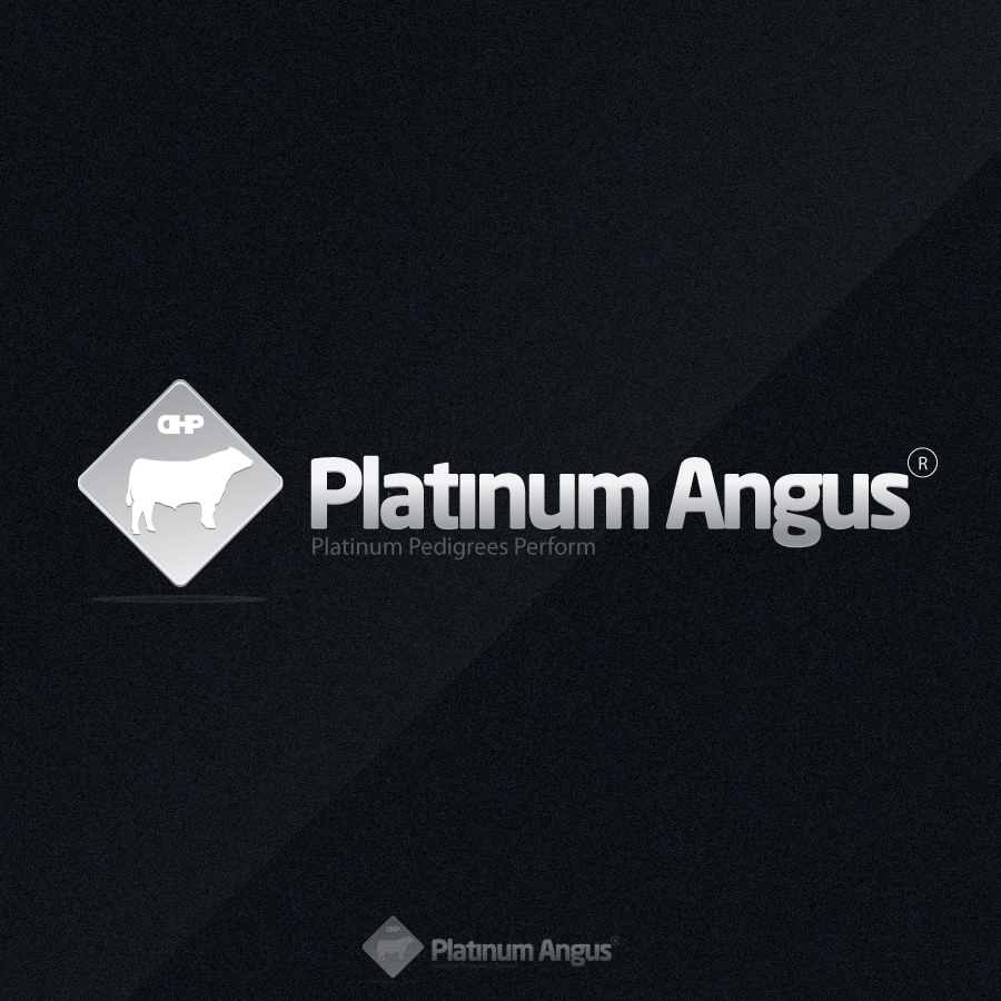Logo Design by rockpinoy - Entry No. 62 in the Logo Design Contest Platinum Angus Cattle.