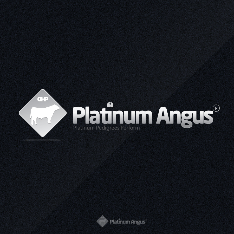 Logo Design by rockpinoy - Entry No. 64 in the Logo Design Contest Platinum Angus Cattle.