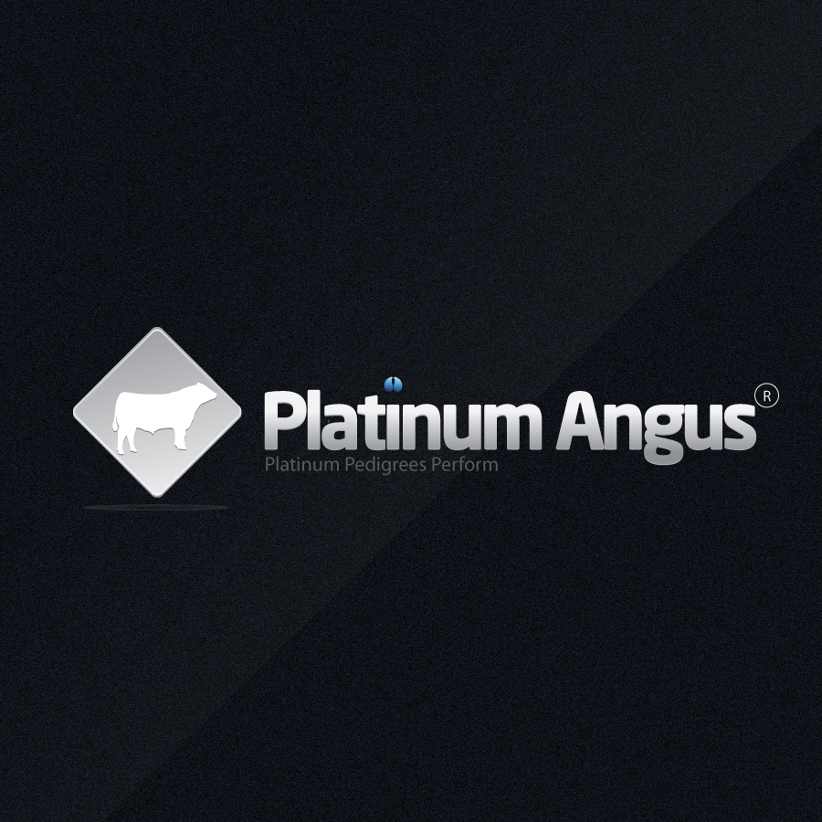 Logo Design by rockpinoy - Entry No. 89 in the Logo Design Contest Platinum Angus Cattle.