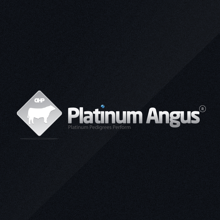 Logo Design by rockpinoy - Entry No. 90 in the Logo Design Contest Platinum Angus Cattle.