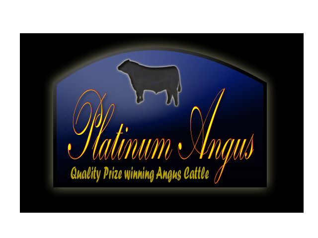 Logo Design by Moag13 - Entry No. 94 in the Logo Design Contest Platinum Angus Cattle.