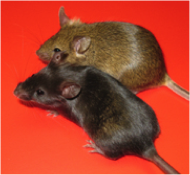 mice (1)