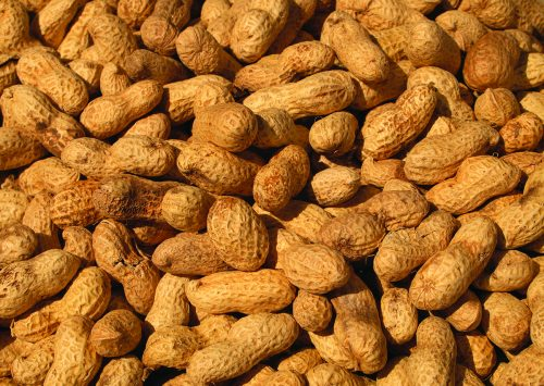 Reference genome for the peanut will help improve one of Alabama's biggest crops