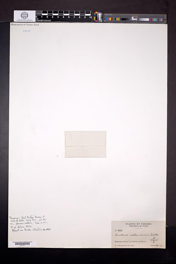 Specklinia colombiana image