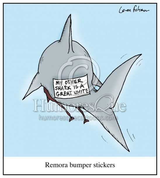 shark remora bumber sticker cartoon