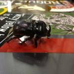 Beetle in a Volkswagen