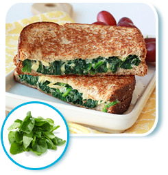 Seasonal Cooking with Spinach