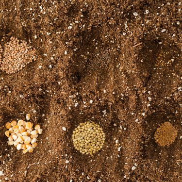 Various seeds laid in the soil.