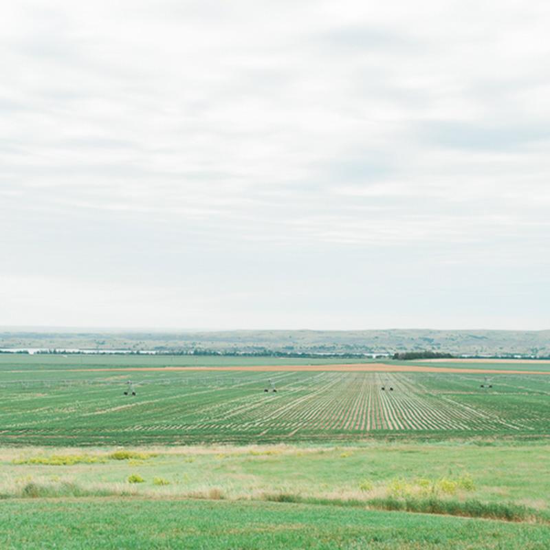 Soybean field in South Dakota.